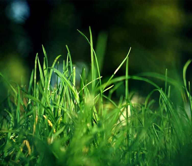 Scarification de sa pelouse : ce qu'il faut savoir