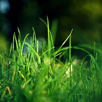 Entretenir ma pelouse